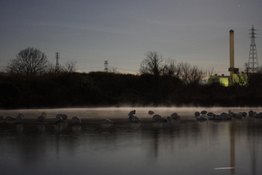 月夜に眠る白鳥たち